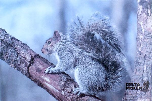 Állatos lőlap, mókus, 535255/2